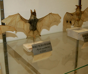 animals, taxidermy, and bats image