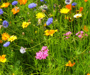 flowers, nature, and grass image