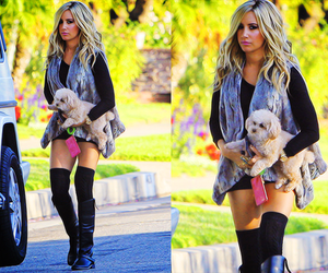 fashion, outfit, and puppy image