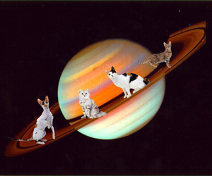 cats, planet, and space image