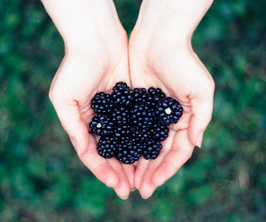 berries, photography, and blackberry image