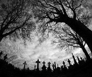tree, cemetery, and sky image