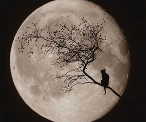 cat, moon, and tree image