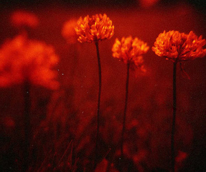 120, lomo, and clover image