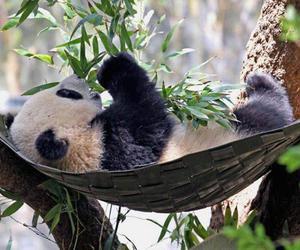 panda, relax, and cute image