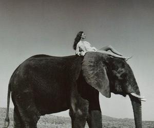 elephant, black and white, and animal image