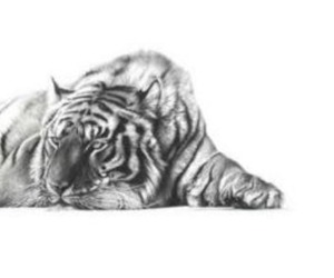 animal, black and white, and drawing image