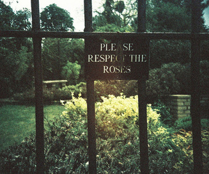 rose, garden, and respect image