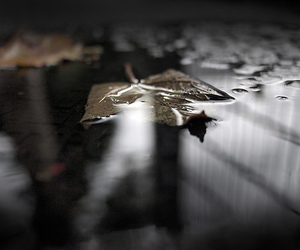 leaf and puddle image