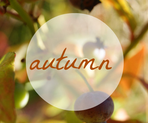 autumn, berry, and text image
