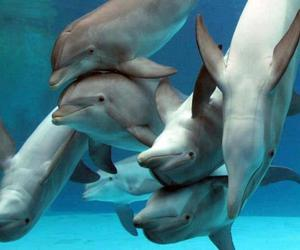 dolphins and animal image