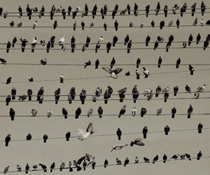 birds and @juusep image