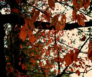 arvores, fall, and autumm image