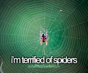 spider, fear, and me image