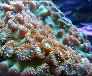 coral, underwater, and fish image