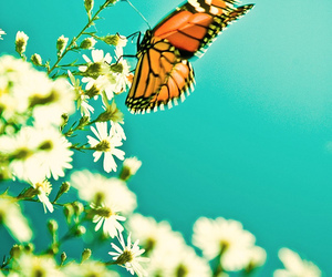butterfly, flowers, and animal image