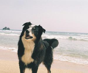 dog, vintage, and beautiful image