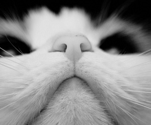 black and white, pretty, and cat image