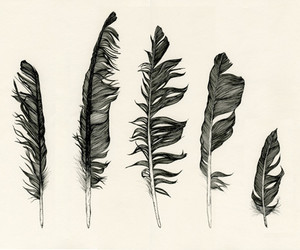 feather, art, and black image