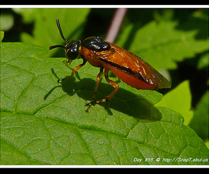 picture of bugs, red beetle bugs, and bugs insects pictures image