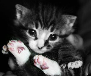 adorable, little, and kitten image