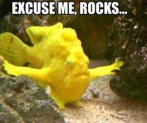 fish, funny, and rock image