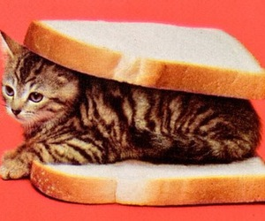 bread, cat, and kitty image
