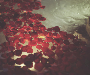 rose, water, and red image