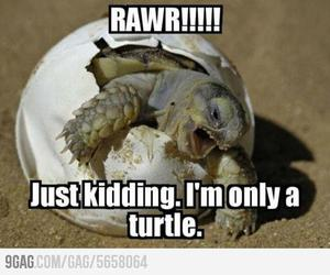 turtle, funny, and cute image