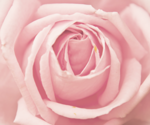 floral, flower, and photography image