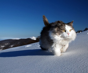 cat, running, and sweet image