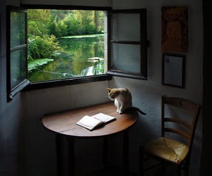 cat, book, and window image