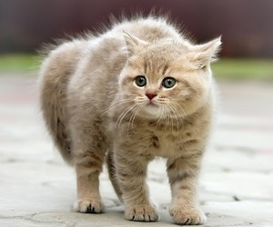 end, fur, and kitten image