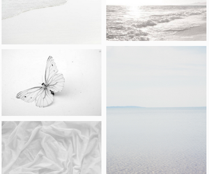 butterfly, white, and photography image