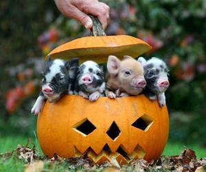 piglets, pumpkin carving, and cute image