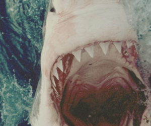 ocean, scary, and shark image