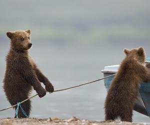 animals, bears, and cute image
