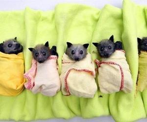 bats, animal, and baby image