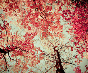 arboles, beautiful, and leaves image