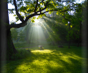 bench, rays, and stump image