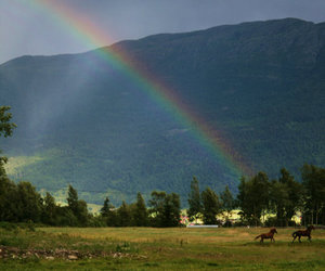 horse and rainbow image