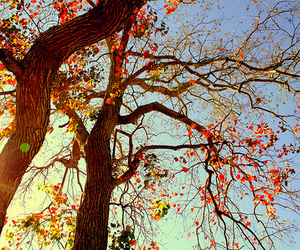autumn, sunny weather, and leaves image