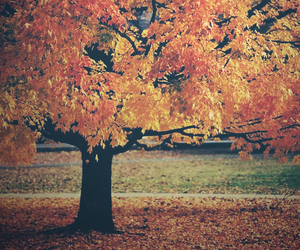 autumn, tree, and fall image