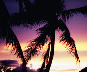 palm trees, summer, and sunset image