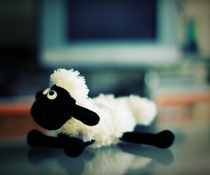 sheep and cute image