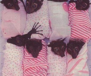 bat, cute, and animal image
