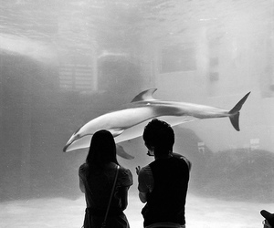 couple, aquarium, and dolphin image