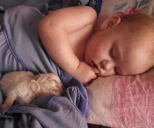 adorable, baby, and dogs image