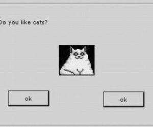 cat, ok, and grunge image
