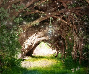 magic, light, and trees image